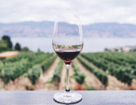 effect van wijn op de huid